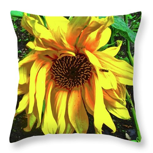 Yellow Throw Pillow featuring the photograph Sad Sunflower by Stephanie Moore
