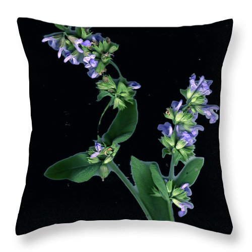 Throw Pillow featuring the photograph Sage Blossom by Wayne Potrafka