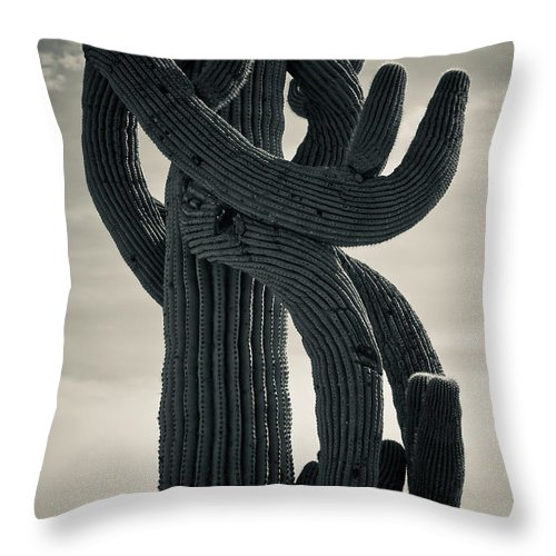 Saguaro Throw Pillow featuring the photograph Saguaro Cactus Armed And Twisted by James BO Insogna