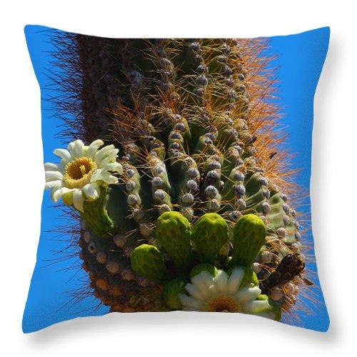Saguaro Throw Pillow featuring the photograph Saguaro Elephant Trunk by James BO Insogna