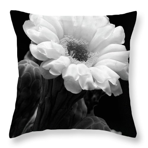 Saguaro Throw Pillow featuring the photograph Saguaro First Bloom by Guy Shultz