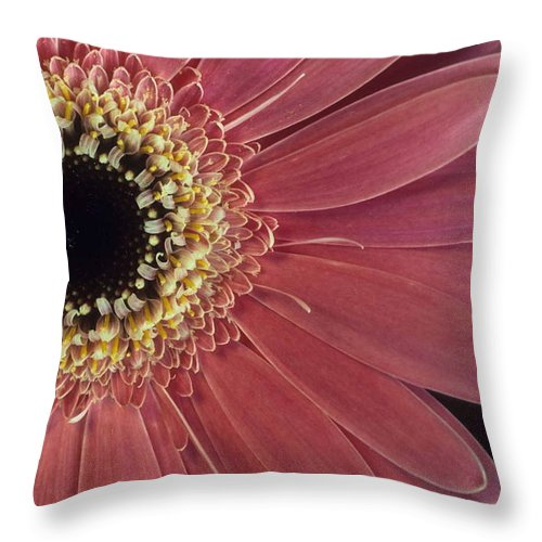 Salmon Gerber Daisy Throw Pillow featuring the photograph Salmon Gerber Daisy by Laurie Paci