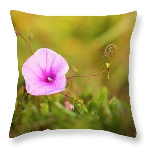 Saltmarsh Morning Glory Throw Pillow featuring the photograph Saltmarsh Morning Glory Flower by Alon Meir