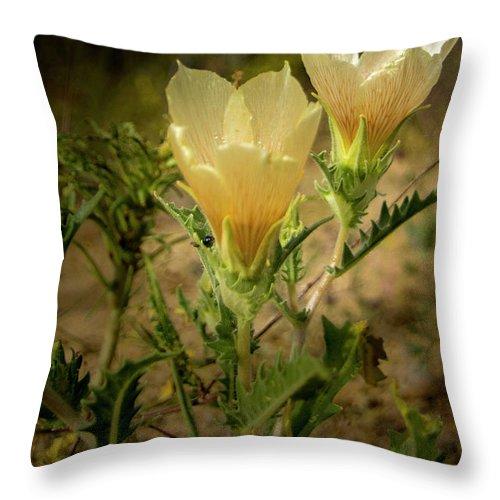 Sand Blazing Star Flower Throw Pillow featuring the photograph Sand Blazing Star Flower 1 by Donald Pash