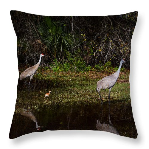 Sandhill Cranes Throw Pillow featuring the photograph Sandhill Cranes And Chicks by Zina Stromberg