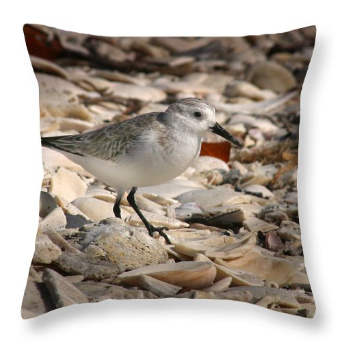 Sandpiper Throw Pillow featuring the photograph Sandpiper by Joseph G Holland