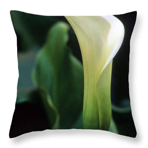 Cala Lilly Throw Pillow featuring the photograph Sandra's Lilly IIi by Laurie Paci