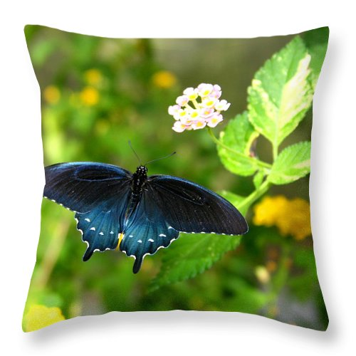 Bug Throw Pillow featuring the photograph Sapphire Swallowtail by David Dunham