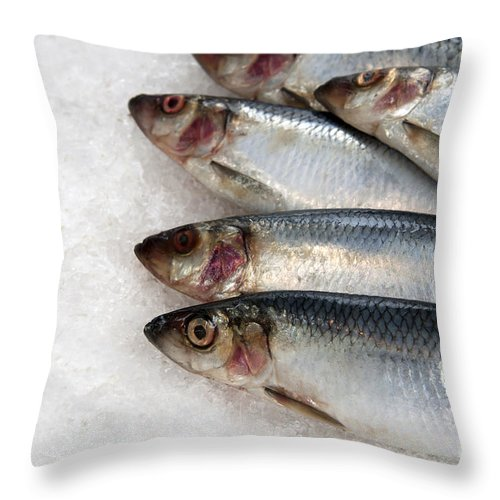 Buy Throw Pillow featuring the photograph Sardines On Ice by Jane Rix