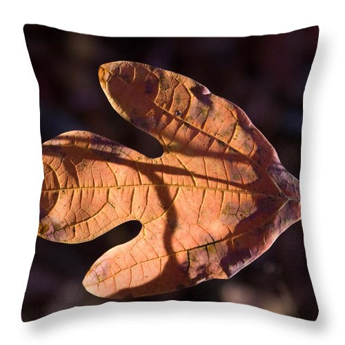 Sassafras Throw Pillow featuring the photograph Sassafras Leaf In Evening Sun by Douglas Barnett