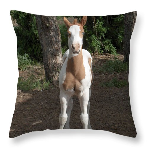 Horse Horses Colt Filly Mare Stallion Foal Ranch Farm Herd Paint Attitude Throw Pillow featuring the photograph Sassy Filly by Andrea Lawrence