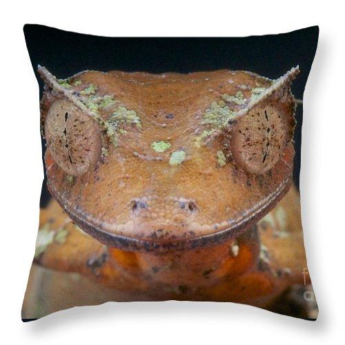 Satanic Leaf-tailed Gecko Throw Pillow featuring the photograph Satanic Leaf-tailed Gecko by Reptiles4all