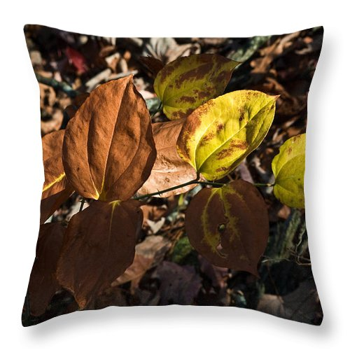Sawbrier Throw Pillow featuring the photograph Sawbrier Or Greenbriar In The Fall by Douglas Barnett