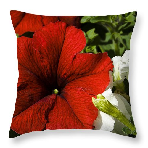 Floral Throw Pillow featuring the photograph Scarlet Burst by David Patterson