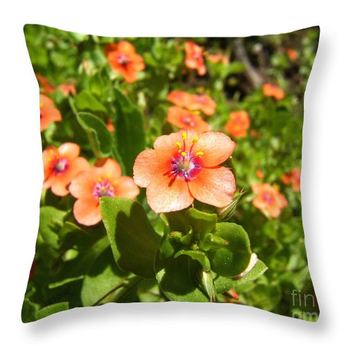Artoffoxvox Throw Pillow featuring the photograph Scarlet Pimpernel Flower Photograph by Kristen Fox