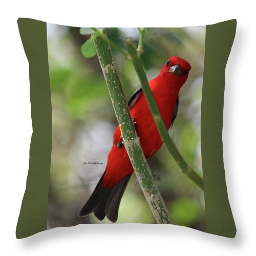 Birds Throw Pillow featuring the photograph Scarlet Tanager by Pat McGrath Avery