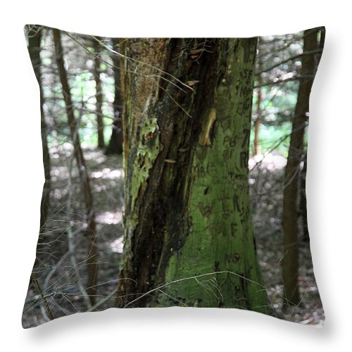 Tree Throw Pillow featuring the photograph Scarred by Amanda Barcon