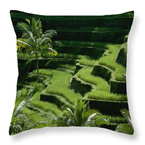 Bali Throw Pillow featuring the photograph Scenic Valleys With Rice Fields In Bali by Paul Chesley