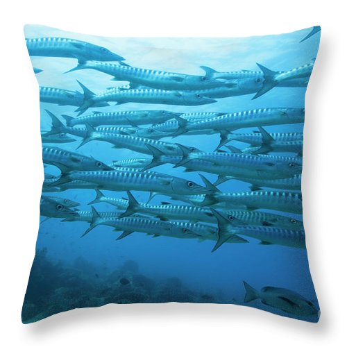Fish Throw Pillow featuring the photograph School Of Barracudas Underwater by MotHaiBaPhoto Prints