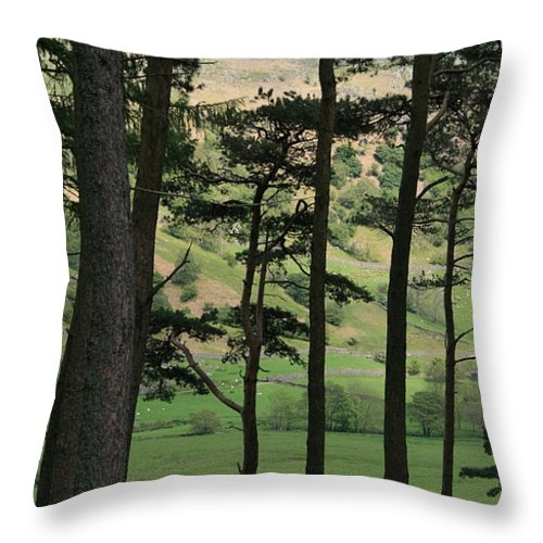 Pine Trees Throw Pillow featuring the photograph Scots Pine by Andy Mercer