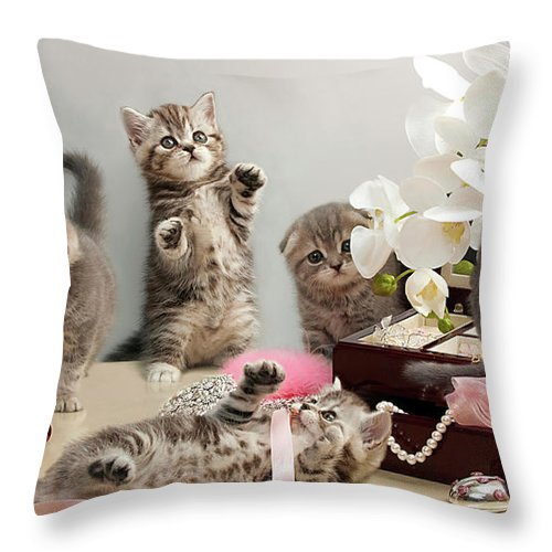 Scottish Fold Cats Throw Pillow featuring the photograph Scottish Fold Cats by Evgeniy Lankin