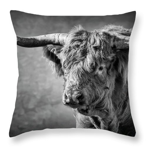 Scottish Highland Bull Throw Pillow featuring the photograph Scottish Highland Bull by Wes and Dotty Weber