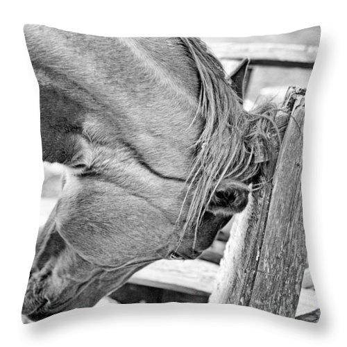 I Go About Looking At Horses And Cattle. They Eat Grass Throw Pillow featuring the photograph Scratch by Luc Bovet