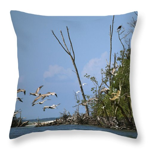 Pelican Throw Pillow featuring the photograph Sea Bird Flight by Joseph G Holland