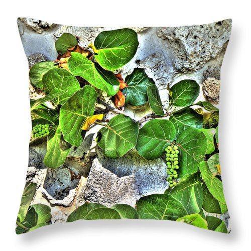 Sea Throw Pillow featuring the photograph Sea Grapes by Rosemary Jardine