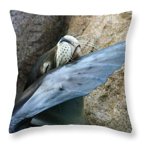 Sea Lion Throw Pillow featuring the photograph Sea Lion Itch by Anthony Jones