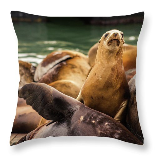 Nature Throw Pillow featuring the photograph Sea Lion Pup by Mirko Chianucci