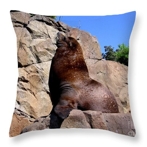 Sealions Throw Pillow featuring the photograph Sea Lion by Rose Santuci-Sofranko