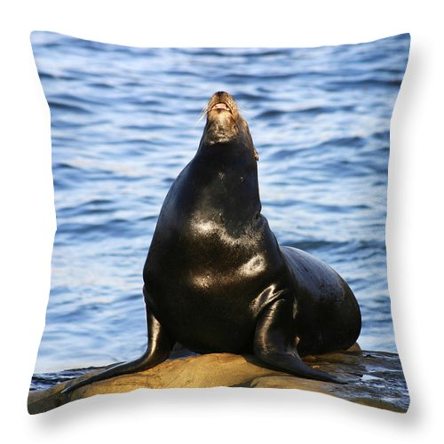 Sea Lion Throw Pillow featuring the photograph Sea Lion Sing by Anthony Jones