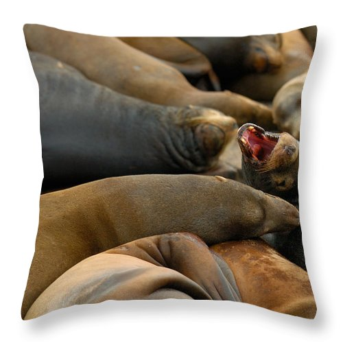 Sea Lions Pier 39 San Francisco Animal Photography Throw Pillow featuring the photograph Sea Lions At Pier 39 San Francisco by Sebastian Musial