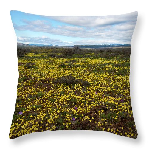 Gold Stars Throw Pillow featuring the photograph Sea Of Gold by Mike Dawson