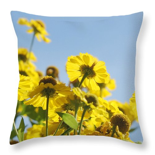 Daisies Throw Pillow featuring the photograph Sea Of Gold by Suzanne Gaff