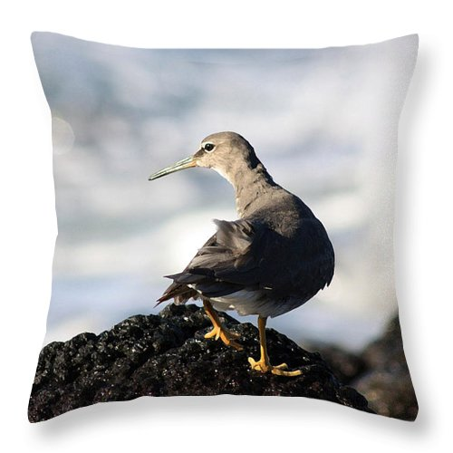 Bird Throw Pillow featuring the photograph Seabird by Mary Haber