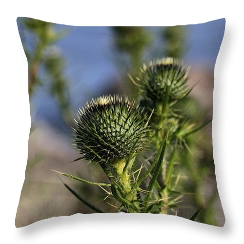 Wildflower Throw Pillow featuring the photograph Seacoast Wildflower II by Robert Morin