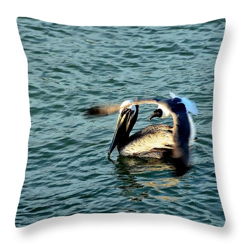 Seagull & Pelican Throw Pillow featuring the photograph Seagull And Pelican by Charles J Pfohl