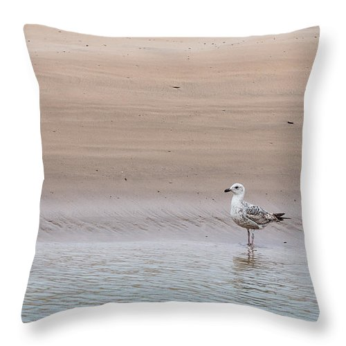Seagull Throw Pillow featuring the photograph Seagull At The Waters Edge by Chris Warham