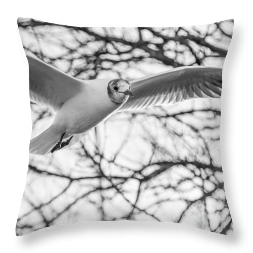 Seagull Throw Pillow featuring the photograph Seagull Fly By Trees by Gyorgy Kotorman