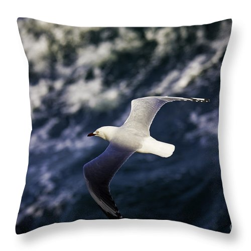 Seagull Throw Pillow featuring the photograph Seagull In Wake by Sheila Smart Fine Art Photography