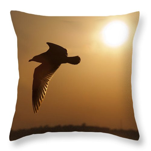 Seagull Throw Pillow featuring the photograph Seagull Sunset by Dustin K Ryan