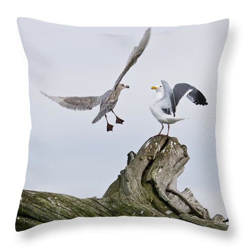 Birds Throw Pillow featuring the photograph Seagulls In Dispute by Chad Davis