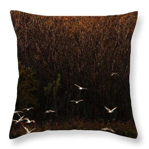 Fall Throw Pillow featuring the photograph Seagulls In Flight by Elizabeth Winter