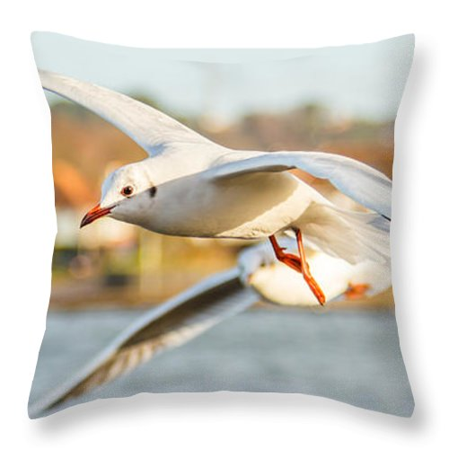 Seagull Throw Pillow featuring the photograph Seagulls In The Air by Gyorgy Kotorman