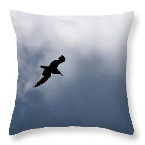 Lehtokukka Throw Pillow featuring the photograph Seagull's Sky 1 by Jouko Lehto