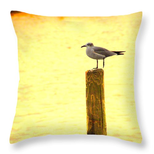 Ocean Throw Pillow featuring the photograph Seagulls Sunset by Laura Brightwood