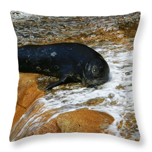 Seal Throw Pillow featuring the photograph Seal by Anthony Jones