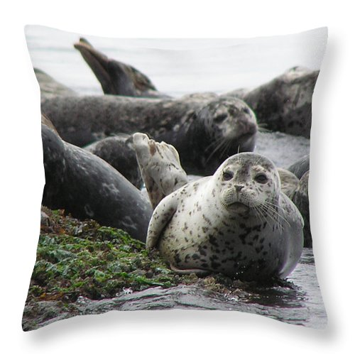 Seals Throw Pillow featuring the photograph Seal Rock by Louise Magno